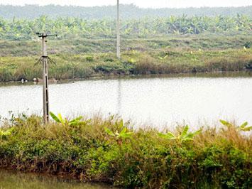Đất bãi bồi huyện Tiên Lãng Hải Phòng